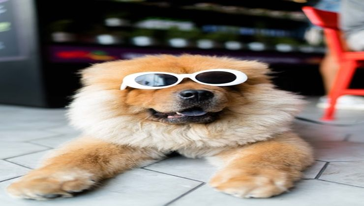 perro-con-complementos-de-la-clínica-veterinaria-Moncan