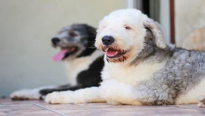 perros-en-el-club-de-socialización-canina-mientras-sus-dueños-acuden-a-uno-de-los-cursos-del-adiestrador-canino