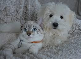 perro y gato perdido anuncios en redes